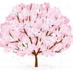 桜の種類と見分け方!さくらの特徴や開花時期の違いは?