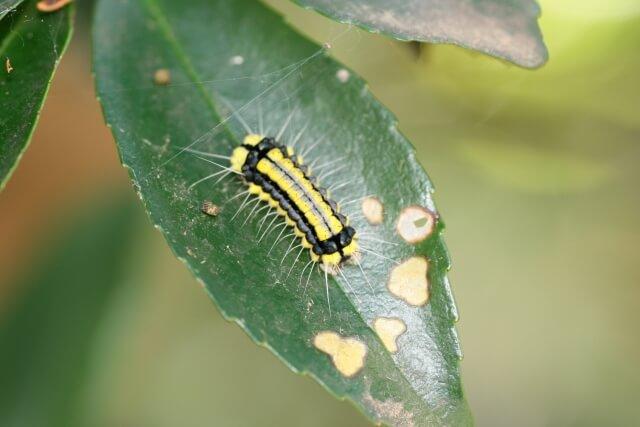 毛虫を予防する時期